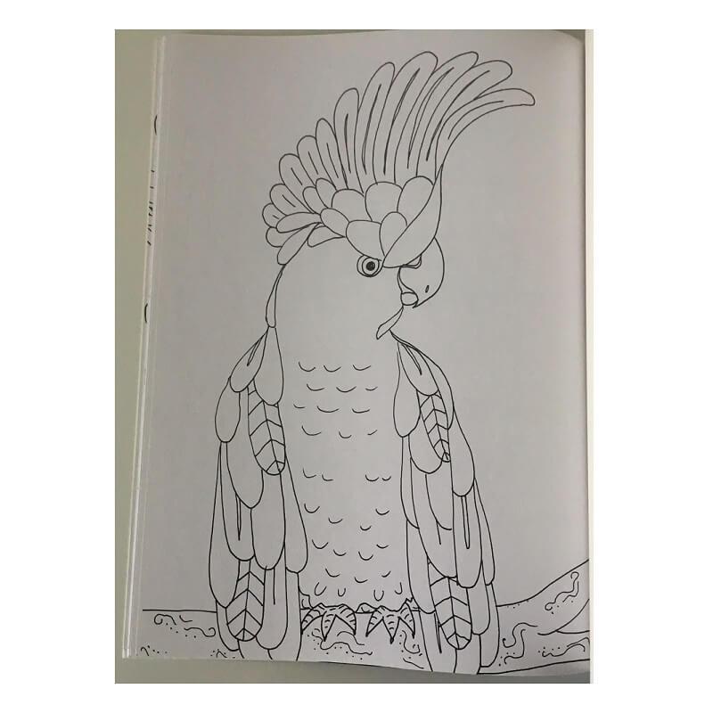 Mandala oiseaux et flore exemple dessin a colorier